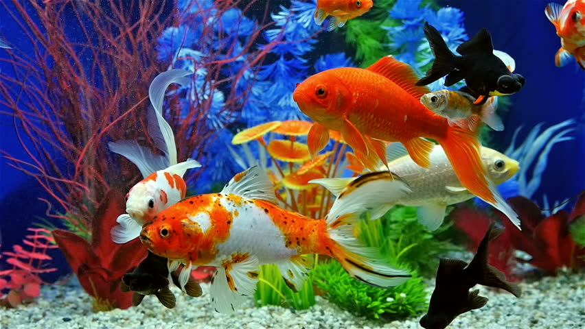 animated aquarium desktop wallpaper windows 7